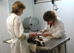 Ветеринарная клиника, Клин