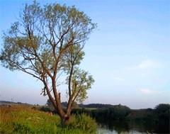 природа Клинского края